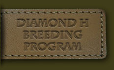 The Diamond H Breeding Program